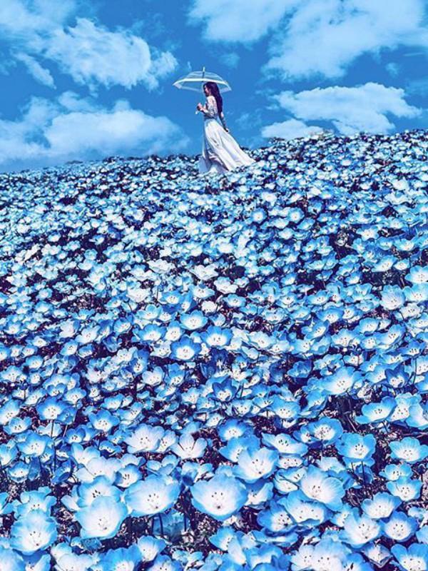 Magični park u Japanu - naći ćete samo plavo cveće