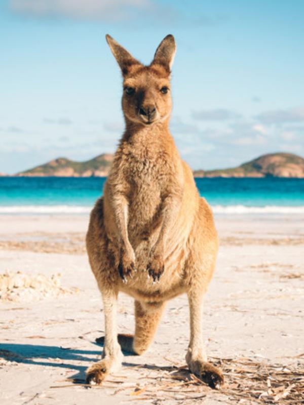 Putovanje: 10 činjenica o Australiji za koje niste znali