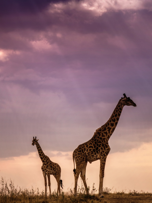 Najlepša mesta Afrike: 5 mesta za posetu