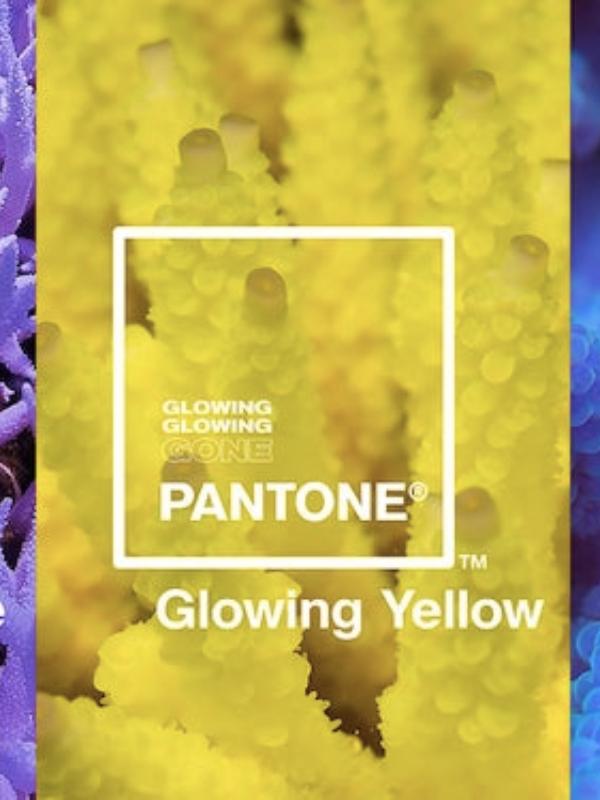 Pantone je posvetio tri nove boje ugroženim vrstama korala